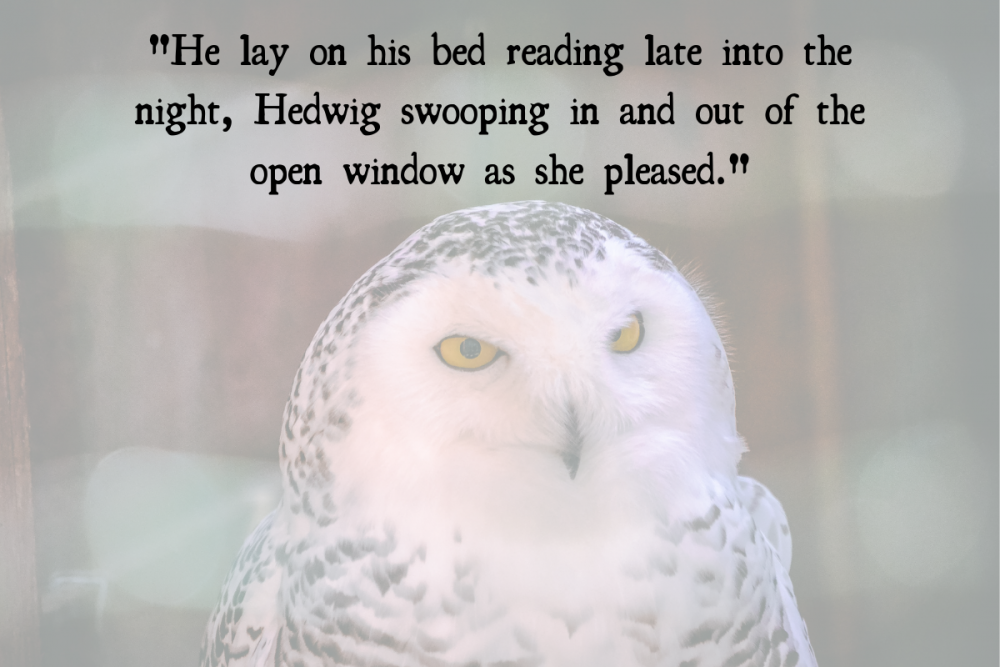 hedwig with harry potter quote